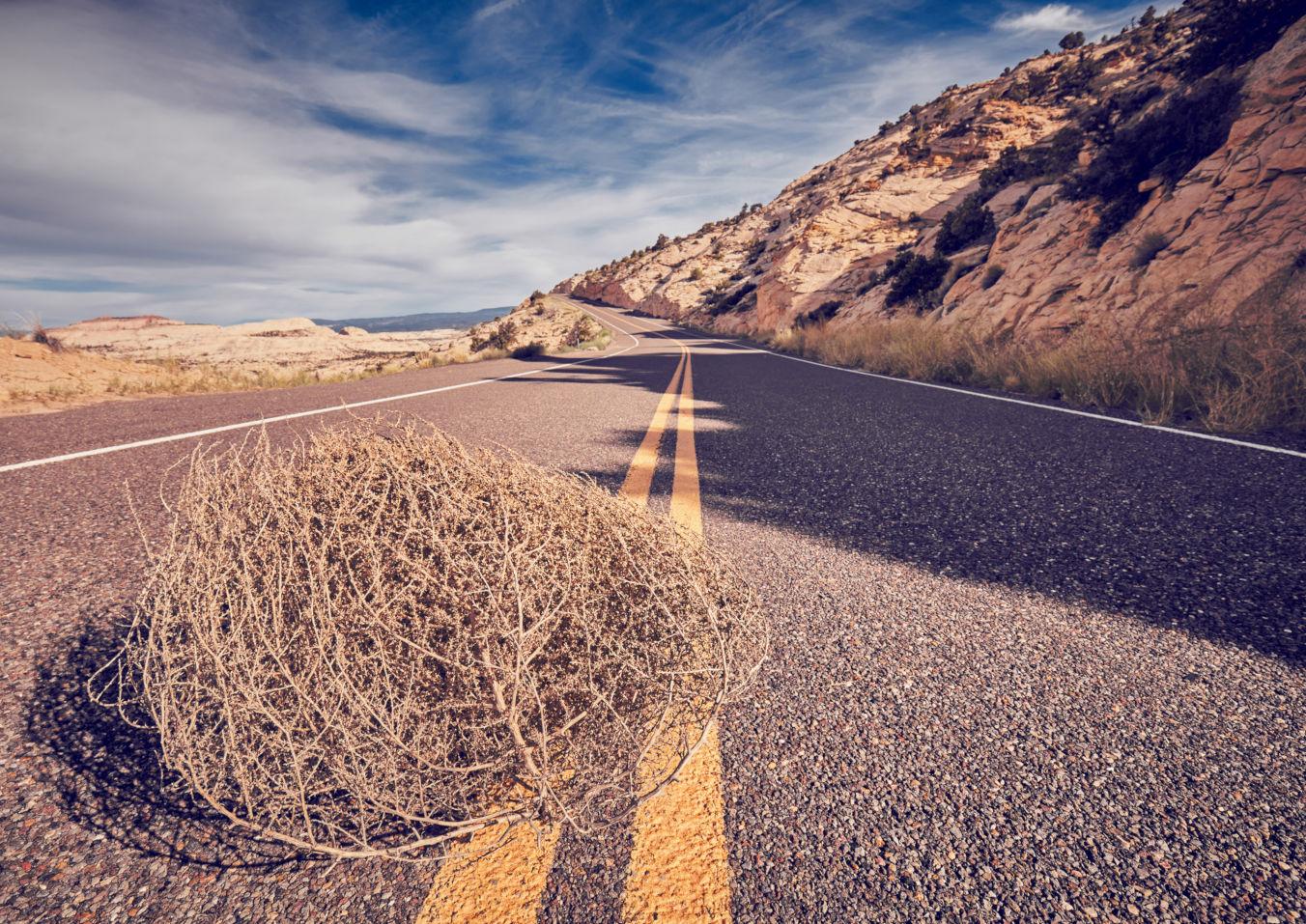 Tumbleweed on a road